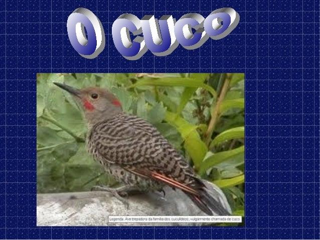 O cuco é unpaxaro que solocanta entremarzo e abril.
