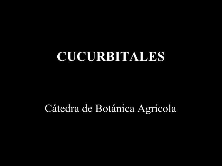CUCURBITALES Cátedra de Botánica Agrícola
