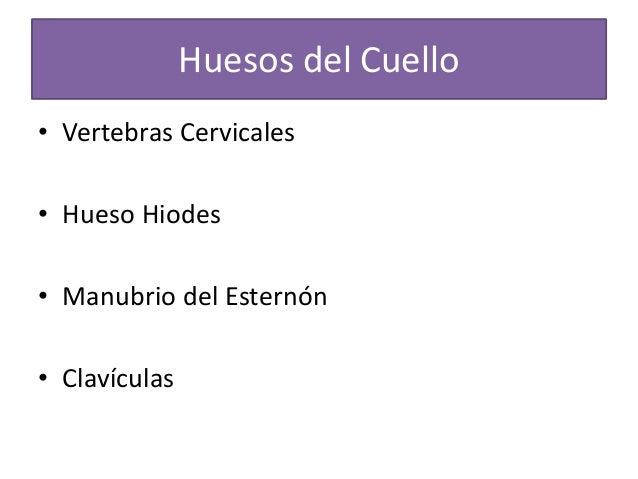 Cuello cirugia  Slide 3
