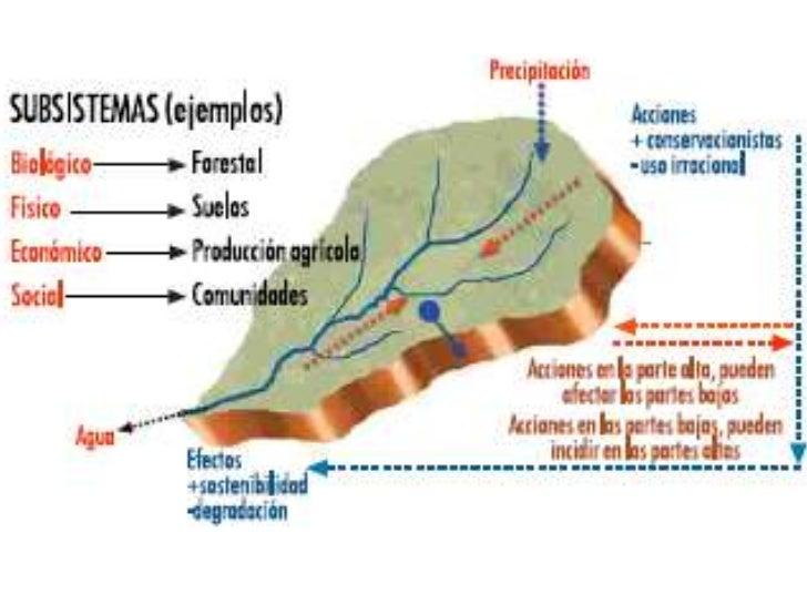 Perfecto Diagrama De Uña Modelo - Anatomía de Las Imágenesdel Cuerpo ...