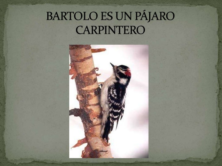 BARTOLO ES UN PÁJARO CARPINTERO<br />