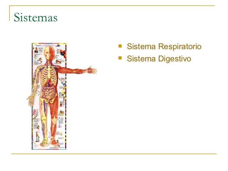 Sistemas <ul><li>Sistema Respiratorio </li></ul><ul><li>Sistema Digestivo </li></ul>
