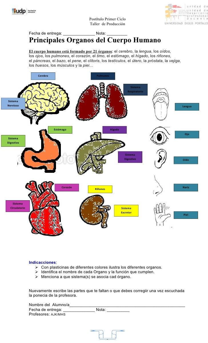 Asombroso órganos Del Cuerpo Humano Motivo - Imágenes de Anatomía ...