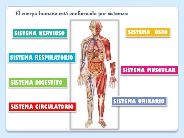 El Cuerpo Humano: Cuerpo Humano