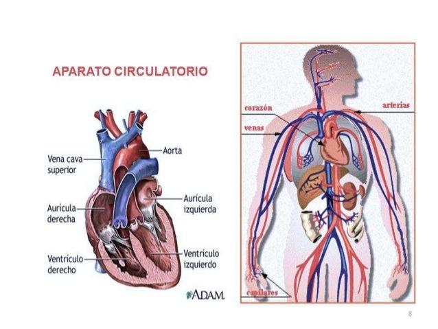 Cuerpo humano ACT2