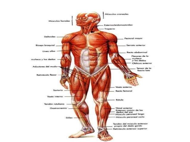 Cuerpo humano tecnicas de estudio