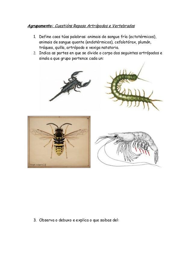 Agrupamento: Cuestións Repaso Artrópodos e Vertebrados1. Define coas túas palabras: animais de sangue fría (ectotérmicos),...