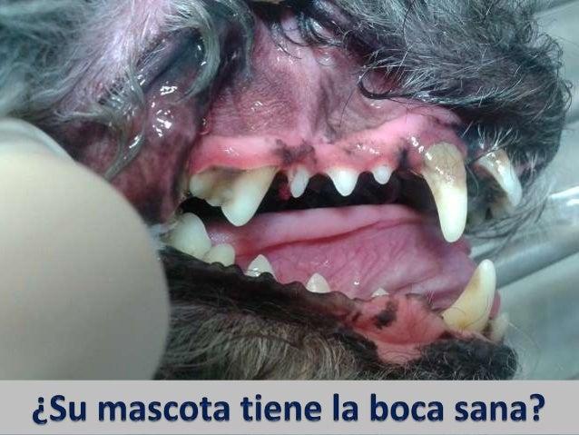 PROBLEMAS DENTALES EN SU MASCOTA: ¿COMO AVERIGUAR SI LOS TIENE? Escoja la respuesta a cada pregunta para su mascota y punt...