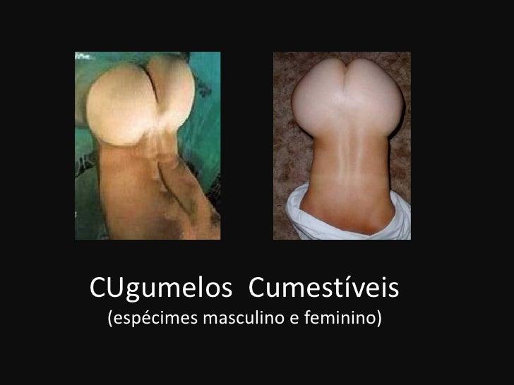 CUgumelos Cumestíveis  (espécimes masculino e feminino)