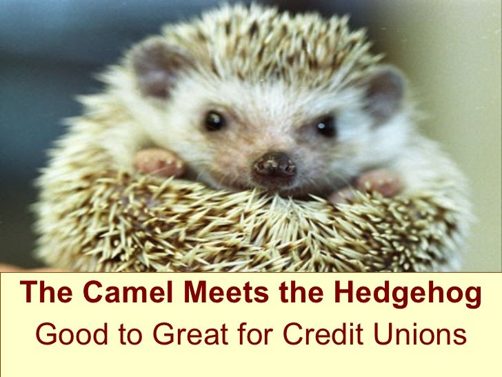 The Camel Meets the Hedgehog Good to Great for Credit Unions
