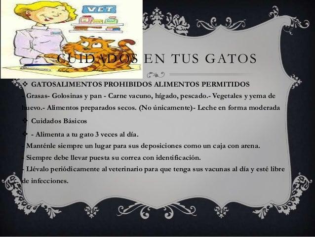 CUIDADOS EN TUS GATOS  GATOSALIMENTOS PROHIBIDOS ALIMENTOS PERMITIDOS - Grasas- Golosinas y pan - Carne vacuno, hígado, p...