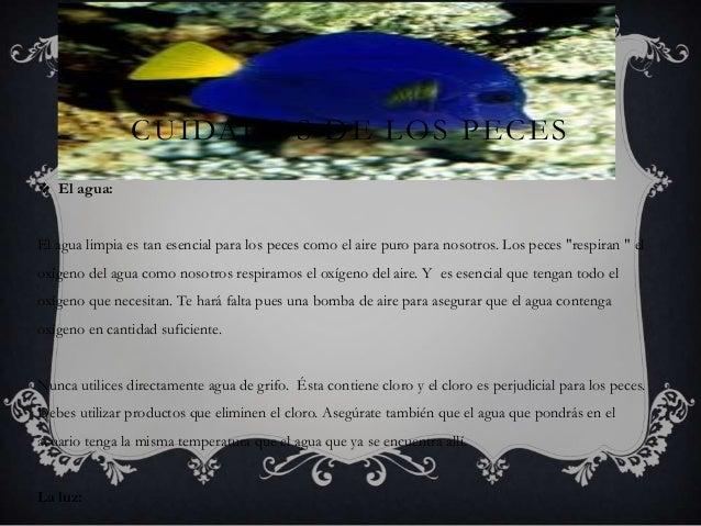 CUIDADOS DE LOS PECES  El agua: El agua limpia es tan esencial para los peces como el aire puro para nosotros. Los peces ...