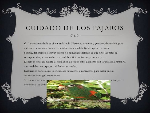 CUIDADO DE LOS PAJAROS  Lo recomendable es situar en la jaula diferentes tamaños y grosores de perchas para que nuestra m...
