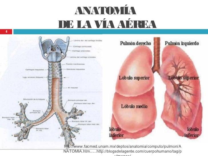 Cuidados de enfermería a pacientes con vía aérea
