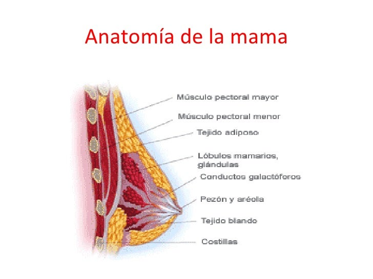 Cuidados en la lactancia materna