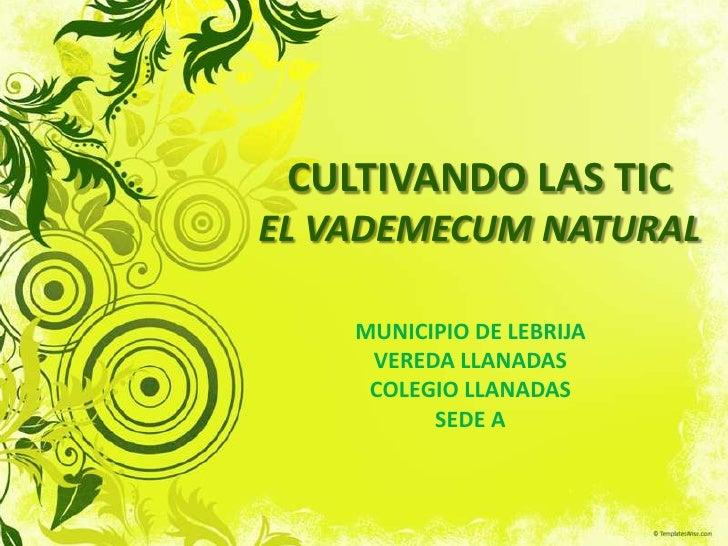 CULTIVANDO LAS TICEL VADEMECUM NATURAL <br />MUNICIPIO DE LEBRIJA<br />VEREDA LLANADAS<br />COLEGIO LLANADAS<br />SEDE A<b...