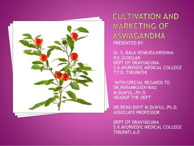Cultivation and marketing of aswagandha new