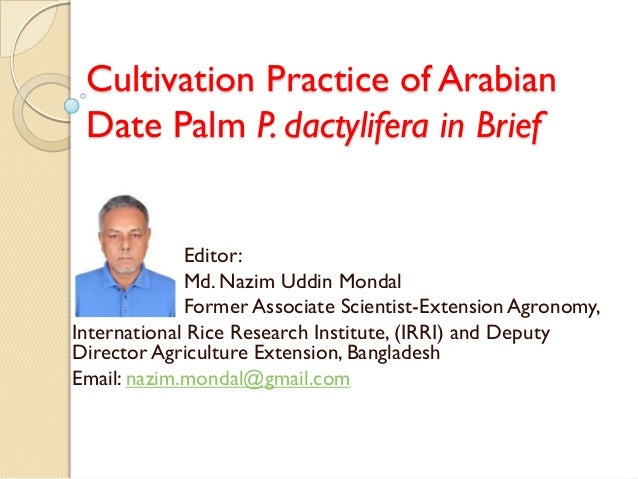 Cultivation Practice of Arabian Date Palm P. dactylifera in Brief Editor: Md. Nazim Uddin Mondal Former Associate Scientis...