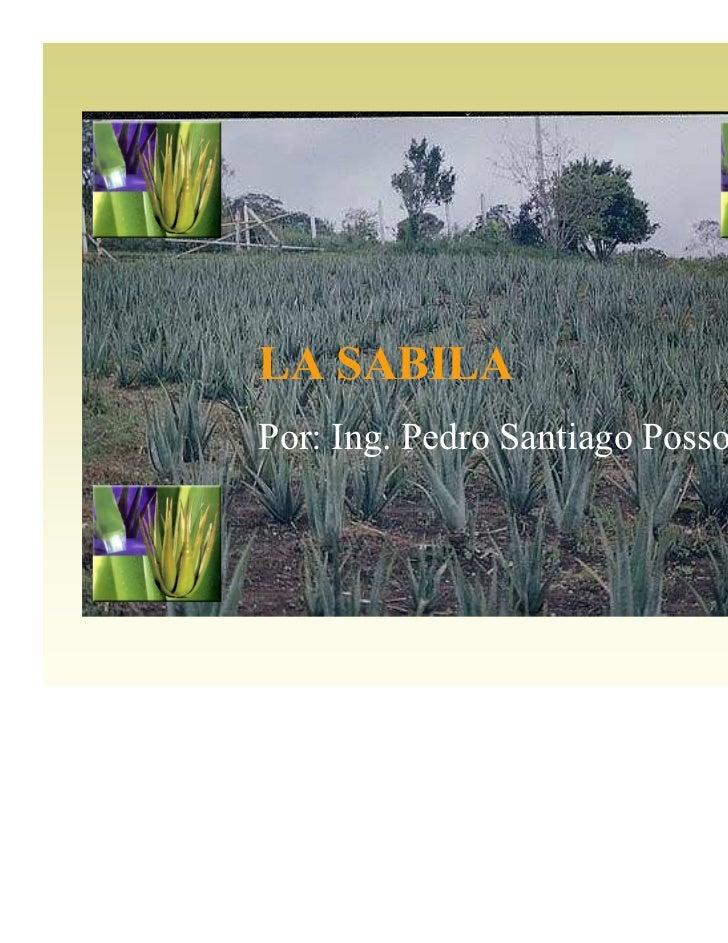 LA SABILA                 Aloe vera,barbadensis  La sábila (Aloe) se ha utilizado a lo largo de la historia  en tratamient...