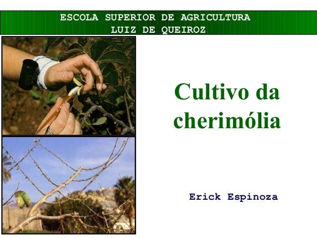 Cultivo da cherimólia Erick Espinoza ESCOLA SUPERIOR DE AGRICULTURA LUIZ DE QUEIROZ