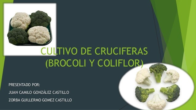 PRESENTADO POR: JUAN CAMILO GONZÁLEZ CASTILLO ZORBA GUILLERMO GOMEZ CASTILLO CULTIVO DE CRUCIFERAS (BROCOLI Y COLIFLOR)