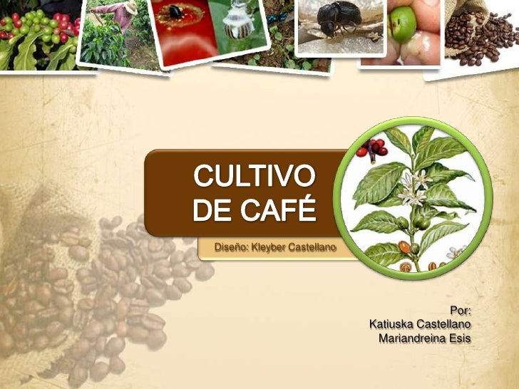 Diseño: Kleyber Castellano                                            Por:                             Katiuska Castellano...