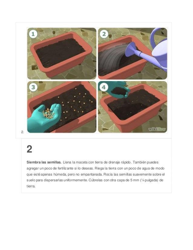 2. 2 Siembra las semillas. Llena la maceta con tierra de drenaje rápido. También puedes agregar un poco de fertilizante si...
