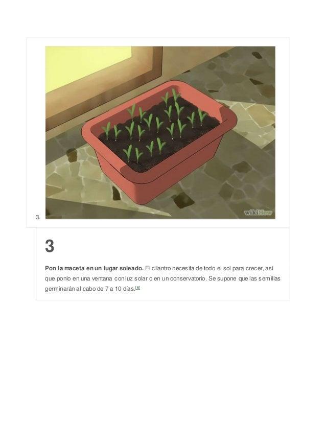3. 3 Pon la maceta en un lugar soleado. El cilantro necesita de todo el sol para crecer, así que ponlo en una ventana con ...