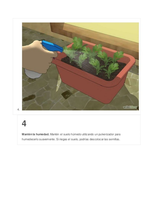 4. 4 Mantén la humedad. Mantén el suelo húmedo utilizando un pulverizador para humedecerlo suavemente. Si riegas el suelo,...