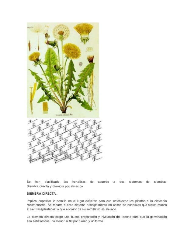 Se han clasificado las hortalizas de acuerdo a dos sistemas de siembra: Siembra directa y Siembra por almacigo SIEMBRA DIR...