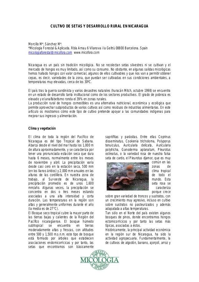 CULTIVO DE SETAS Y DESARROLLO RURAL EN NICARAGUA Morcillo M*, Sánchez M*. *Micologia Forestal & Aplicada. Rbla Arnau 6 Vil...