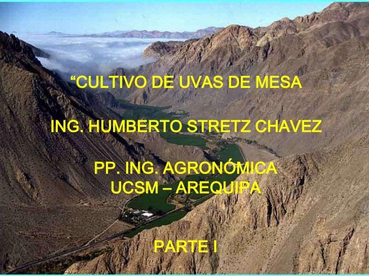"""CULTIVO DE UVAS DE MESA  ING. HUMBERTO STRETZ CHAVEZ      PP. ING. AGRONÓMICA      UCSM – AREQUIPA             PARTE I"