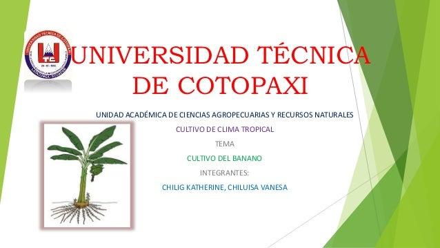 UNIVERSIDAD TÉCNICA DE COTOPAXI UNIDAD ACADÉMICA DE CIENCIAS AGROPECUARIAS Y RECURSOS NATURALES CULTIVO DE CLIMA TROPICAL ...