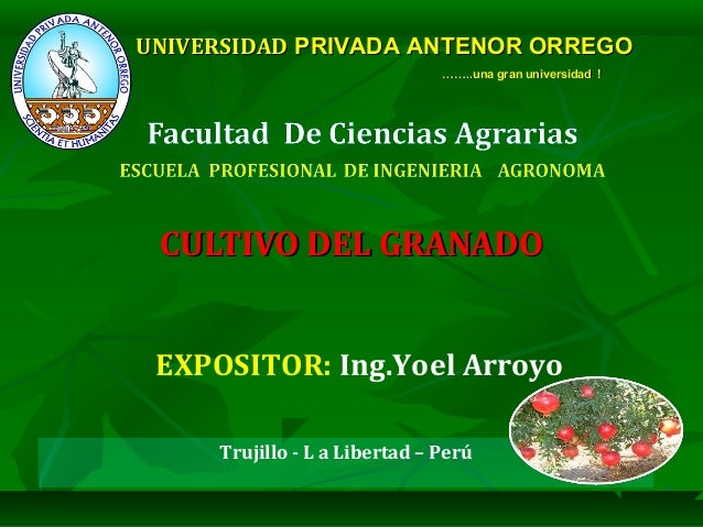 Trujillo - L a Libertad – Perú CULTIVO DEL GRANADOCULTIVO DEL GRANADO UNIVERSIDADUNIVERSIDAD PRIVADA ANTENOR ORREGOPRIVADA...