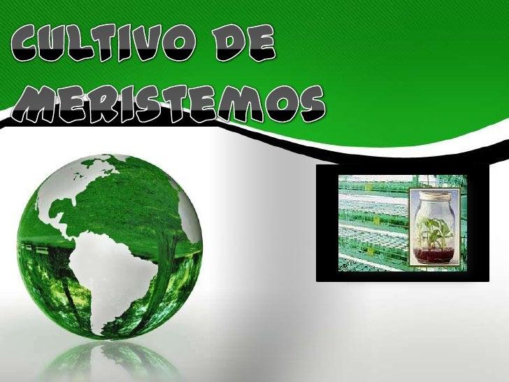 CONTENID         O¿Que es el Cultivo de Meristemos?¿Características del cultivo de meristemos?¿ Para que sirve el Cultivo ...