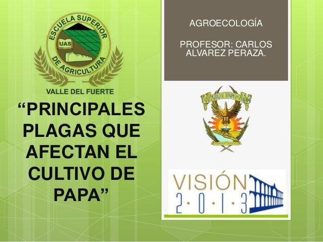 """AGROECOLOGÍA               PROFESOR: CARLOS                ALVAREZ PERAZA.""""PRINCIPALES PLAGAS QUE AFECTAN EL CULTIVO DE   ..."""