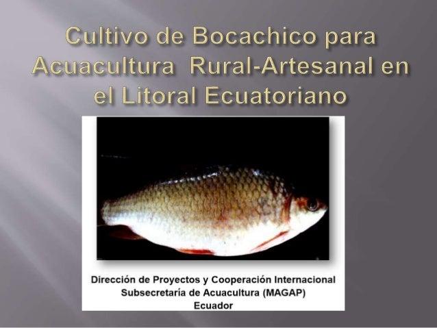 Cultivo de peces por quinga v y morales l for Cuidado de peces