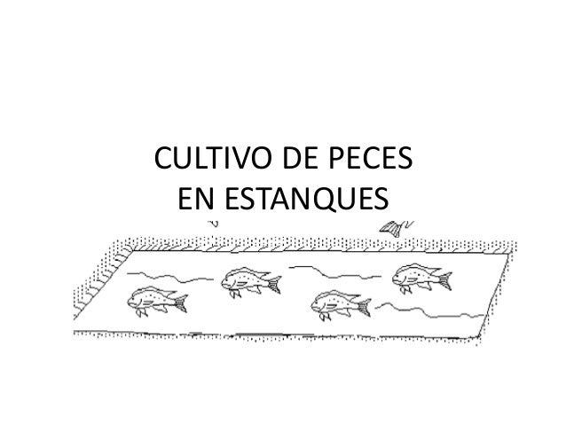 CULTIVO DE PECES EN ESTANQUES