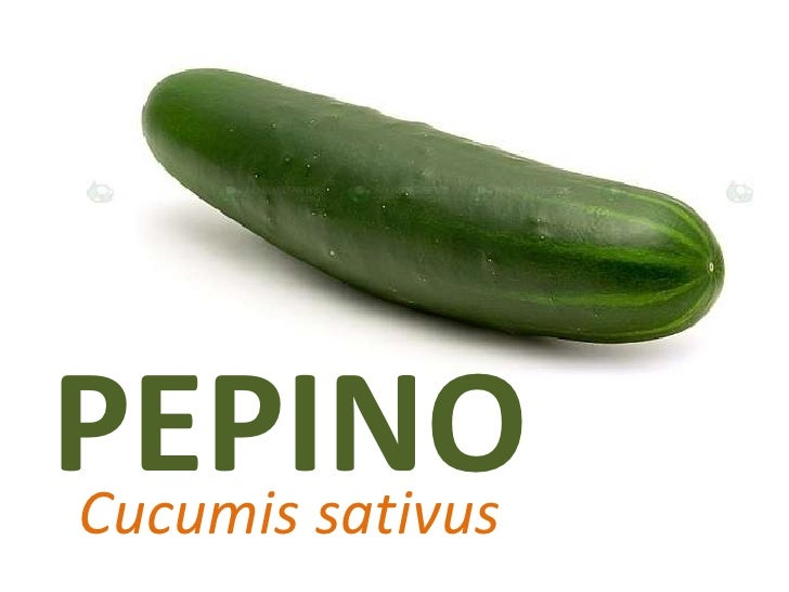 PEPINO<br />Cucumissativus<br />