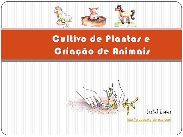 Cultivo de Plantas e Criação de Animais<br />Isabel Lopes<br />http://bioesc.wordpress.com<br />