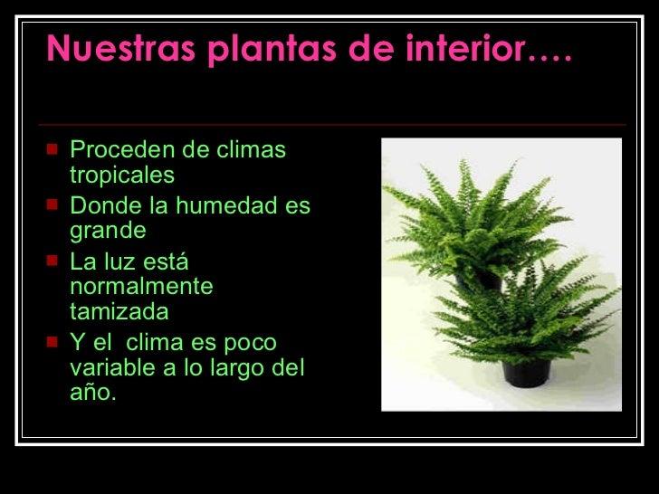 Cultivo de plantas en invernadero Plantas tropicales interior