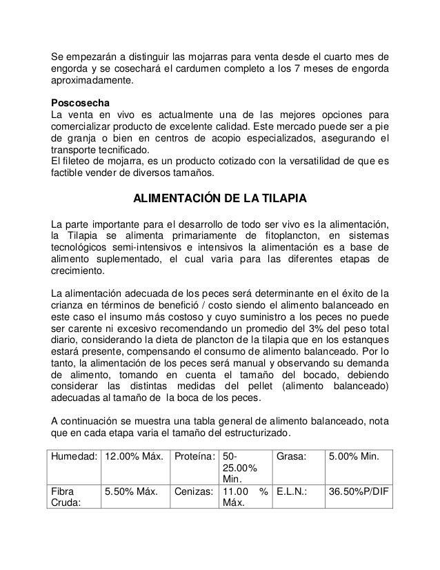 Cultivodetilapiaenestanquescirculares for Engorda de tilapia en estanques rusticos