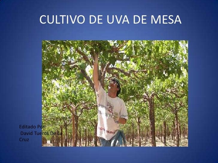 CULTIVO DE UVA DE MESAEditado Por:David Tueros De LaCruz
