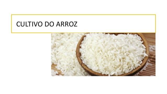 CULTIVO DO ARROZ