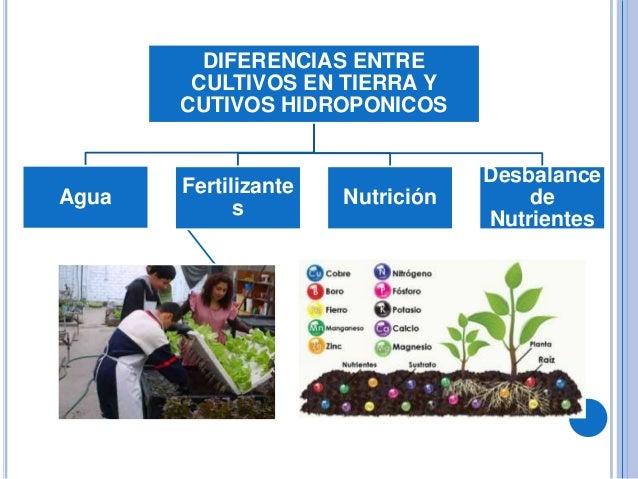 diferencias entre cultivos en tierra y cutivos agua s nutricin desbalance de nutrientes