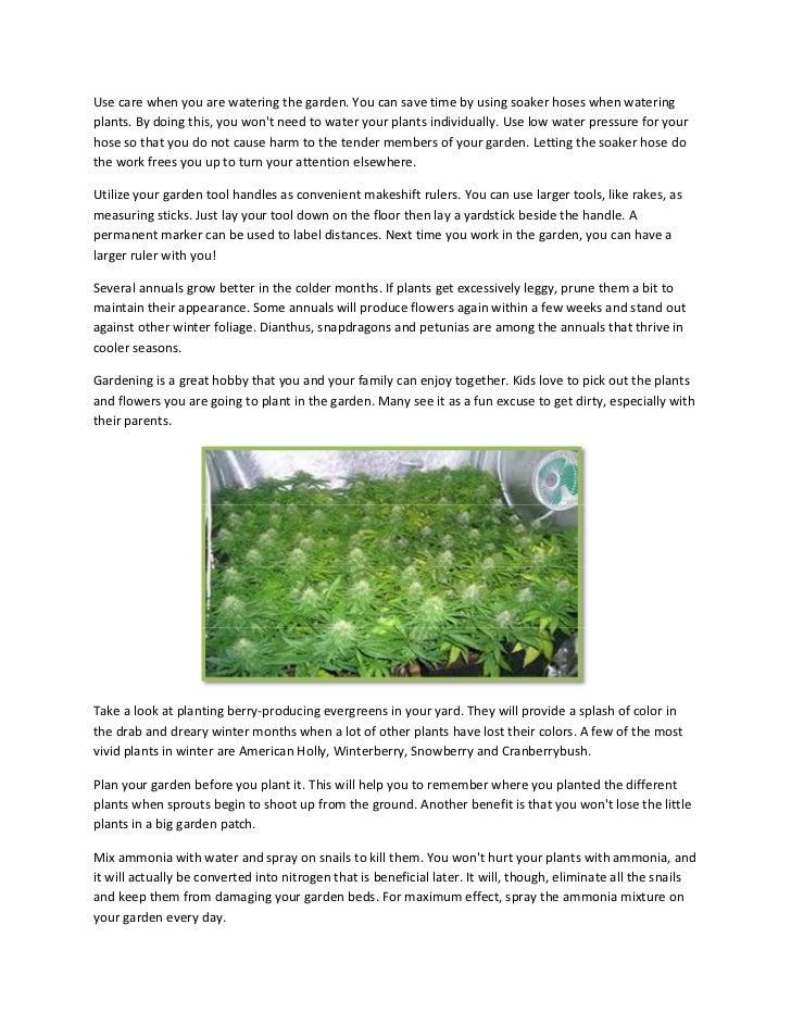 Cultivo indoor Slide 2