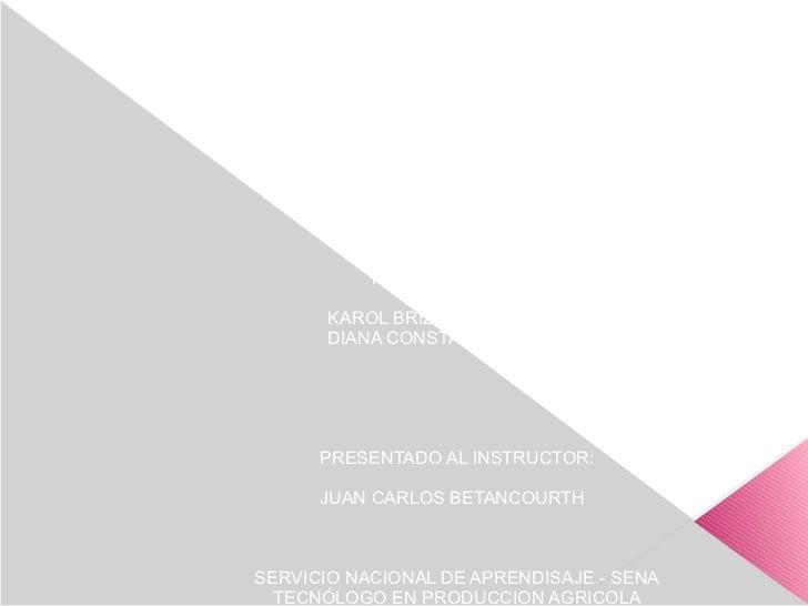 MANEJO INTEGRAL DEL CULTIVO DE TOMATE DE FORMA                  ECOLOGICA              (VARIEDAD CHONTO)               PRE...