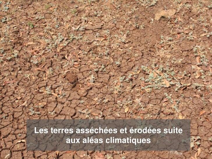 Les terres asséchées et érodées suite        aux aléas climatiques