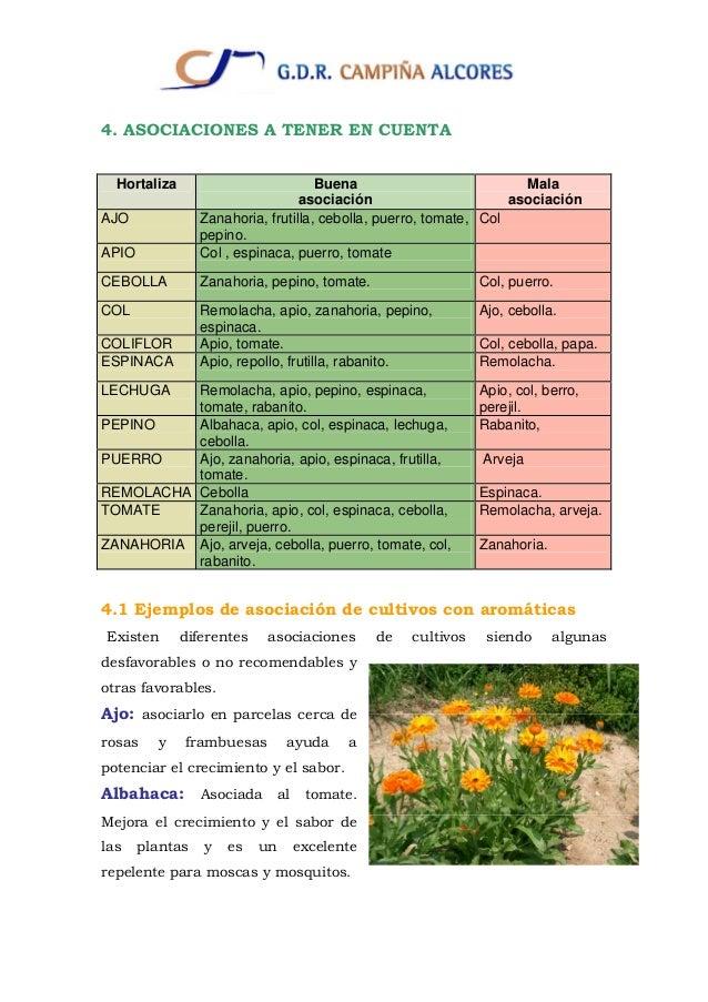 Cultivos for Asociacion de cultivos tomate