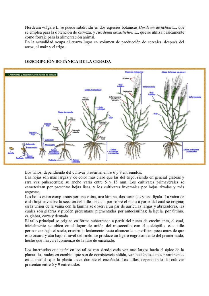 Cultivos basicos for Botanica general pdf